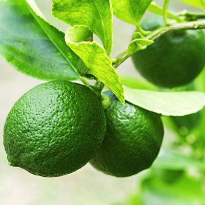 درخت-لیمو
